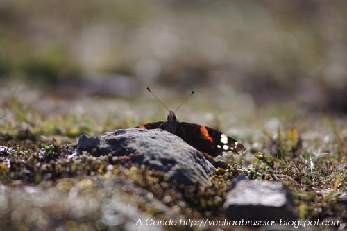 Mariposa enorme