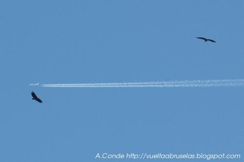 Avión Buitre Alcón o Supermán?