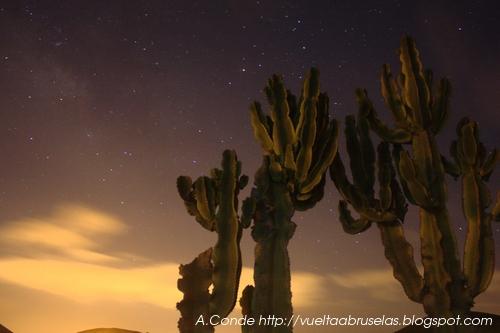 Cactus y estrellas.
