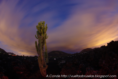 Cactus y nubes.